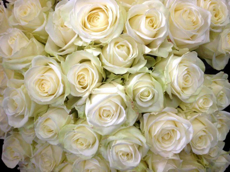 livraison fleurs bordeaux bouquet de roses blanches Réalisation Carré Roses fleuriste Bordeaux