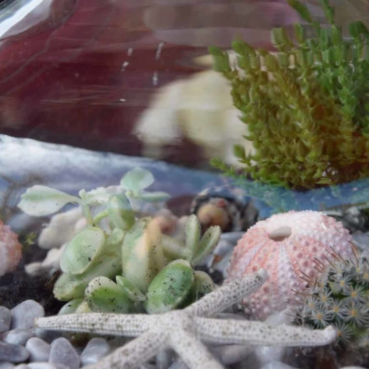 terrarium bordeaux plantes grasses cactus plantes vertes atelier fleuriste bordeaux begles floirac