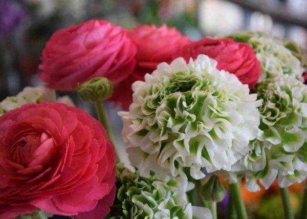 renoncule-fleurs-fleuriste-bordeaux-livraison-champetre