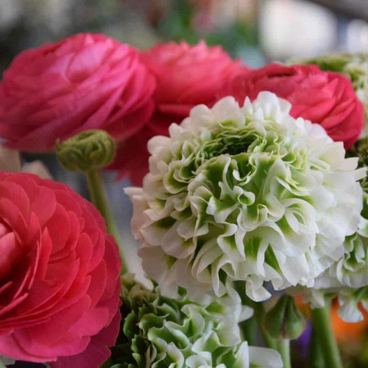 Fleurs Bordeaux boulevards - Carré Roses Artisan Fleuriste 1ea0adf5134