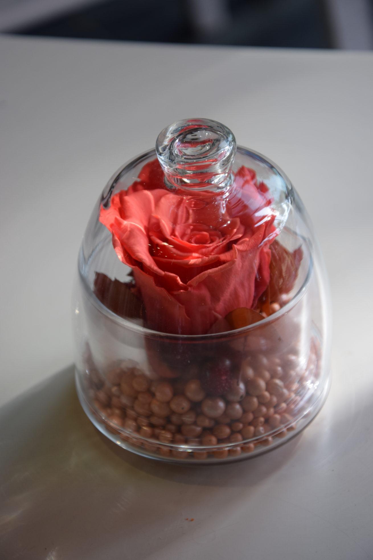 rose-eternelle-cloche-bordeaux