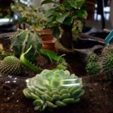 creation plantes terrarium bordeaux