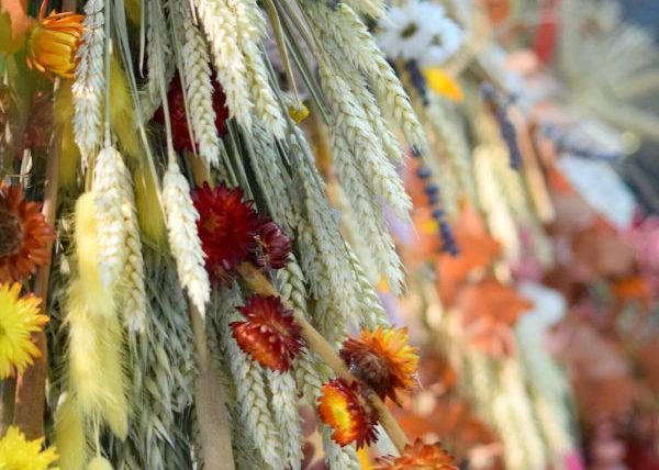 fleurs séchées bordeaux
