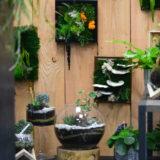 cadre-vegetal-stabilise-fleuriste-bordeaux