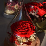 rose-eternelle-cloche-carreroses