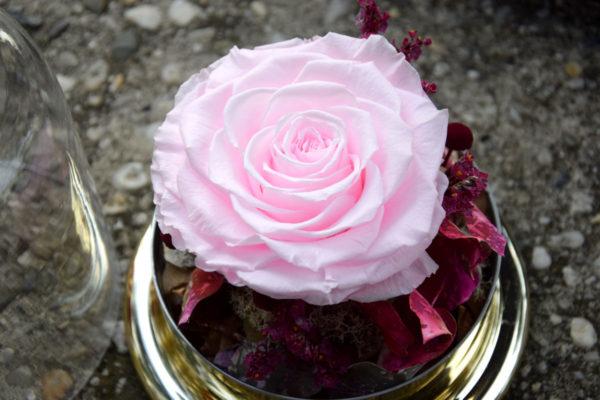 cloche rose éternelle XL fleuriste