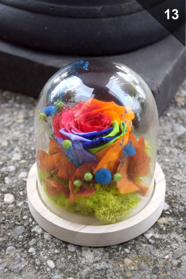 cloche rose éternelle rainbow fleuriste
