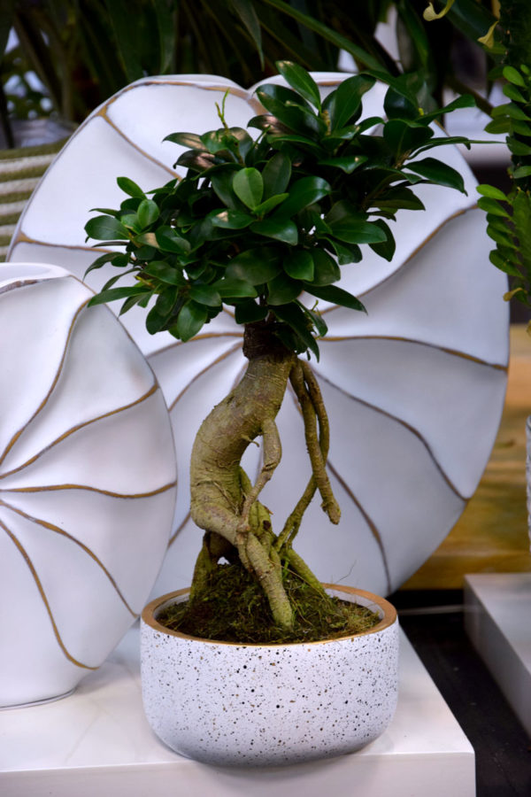 bonsai fleuriste bordeaux begles