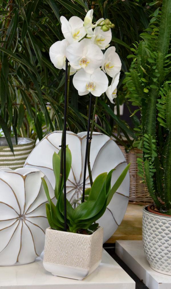 orchidée artisan fleuriste
