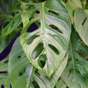 feuille plantes vertes et fleuries